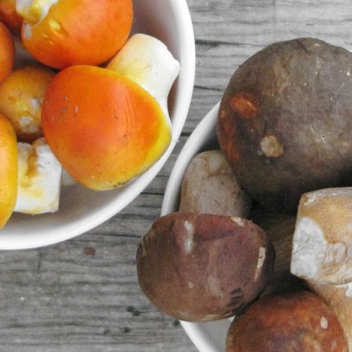 Άγρια μανιτάρια, βασιλομανίταρα ή porcini, κανθαρέλλες, τρομπέττες, τρούφες και πολλά άλλα