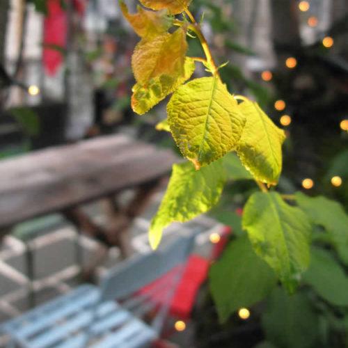 Η αυλή τής Στέρνας με το μεγάλο ξύλινο τραπέζι για το κρασί σας ή τον καφέ για τα δροσερά καλοκαιρινά απογεύματα!